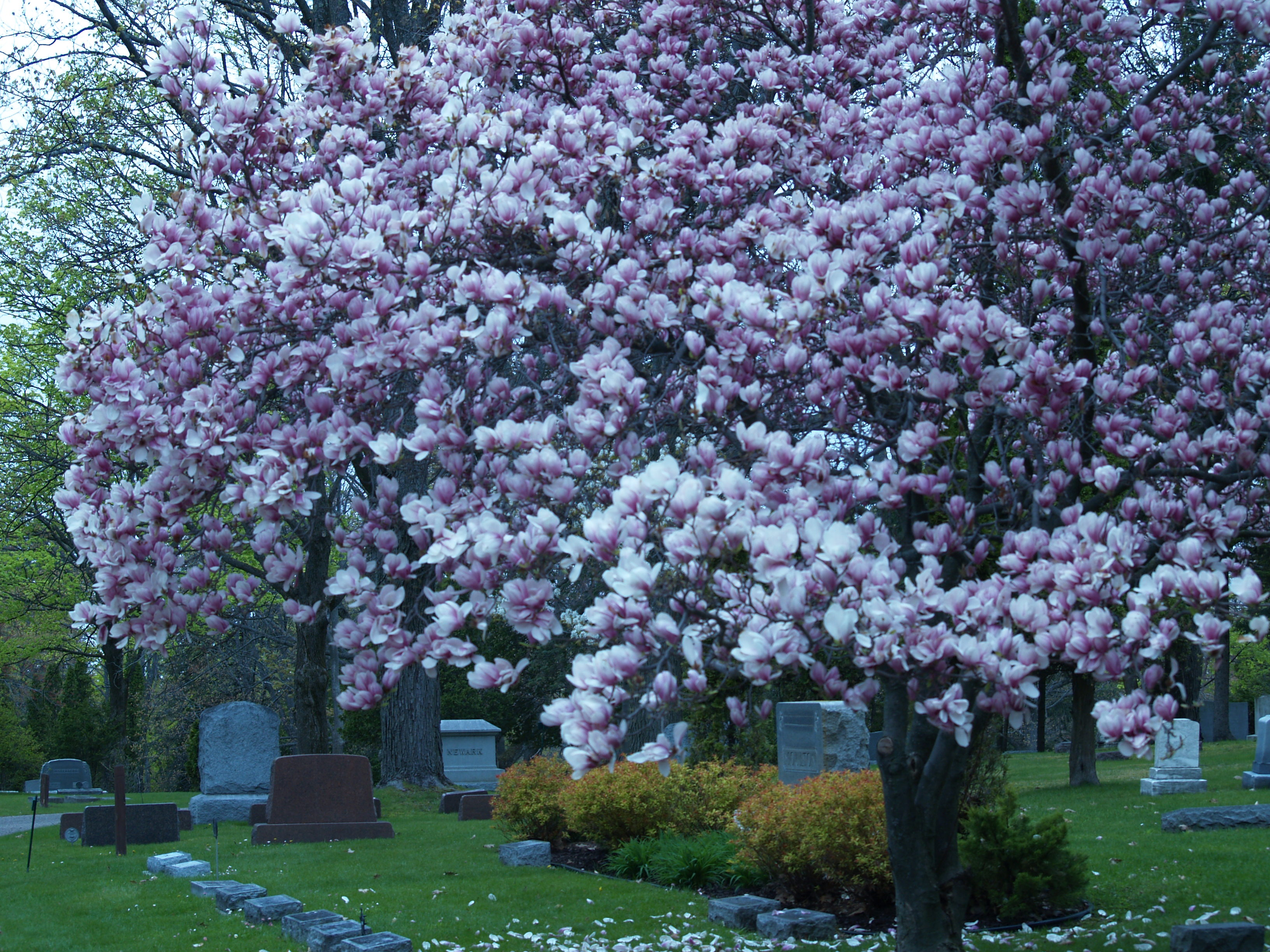 Flowers Blooming in the Cemetery