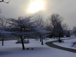 photo of a park in winter